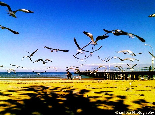A Conversation with Sea Gulls